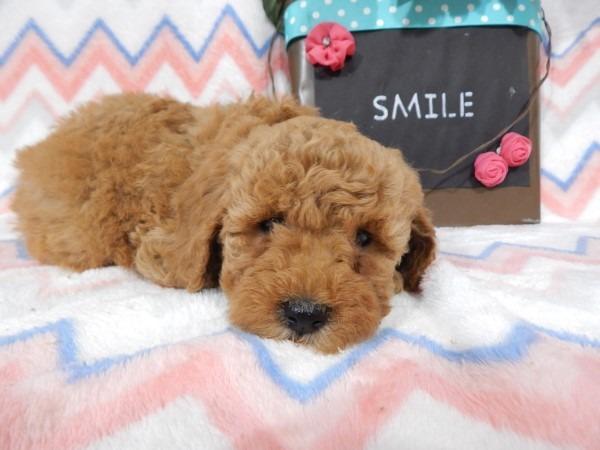 Puppy Smile